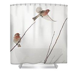 Winter Wind Surfing 2 Shower Curtain