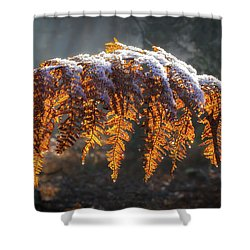 Winter Woods Shower Curtain by Shirley Mitchell