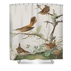 Winter Wren Or Rock Wren Shower Curtain
