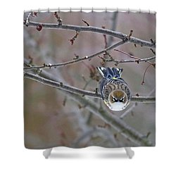 Winter Yellow-rumped Shower Curtain