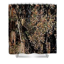 Wintering Monarchs Shower Curtain