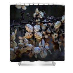 Winterized Hydrangea Shower Curtain