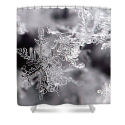 Winter's Beauty Shower Curtain