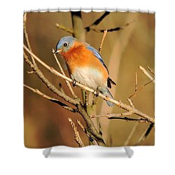 Winter's Bluebird  Shower Curtain