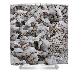 Winter's Contrast Shower Curtain by Carol Groenen