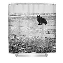 Shower Curtain featuring the photograph Winter's Stalker by Rikk Flohr