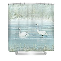Shower Curtain featuring the photograph Trumpeter Swan's Winter Rest Blue by Jennie Marie Schell