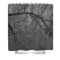 Wintery Tree Shower Curtain