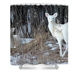 Wintery White Shower Curtain by Brook Burling