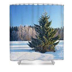Wintry Fir Tree Shower Curtain by Teemu Tretjakov