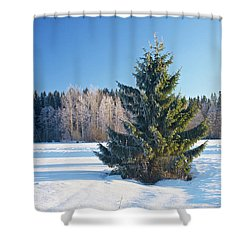 wintry fir tree shower curtain