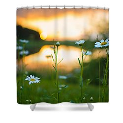 Shower Curtain featuring the photograph Wisconsin Daisies At Sunset by Alex Blondeau