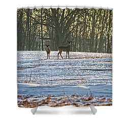Wisconsin Whitetail Deer Shower Curtain