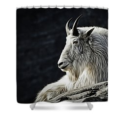 Wisdom From Up High Shower Curtain by Brad Allen Fine Art
