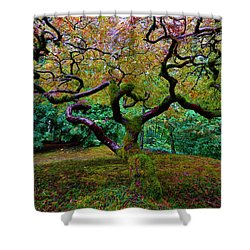 Shower Curtain featuring the photograph Wisdom Tree by Jonathan Davison