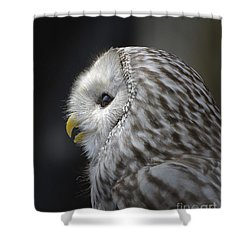 Wise Old Owl Shower Curtain by Kathy Baccari