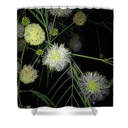 Wishing On A          J L H Shower Curtain by Kimo Fernandez