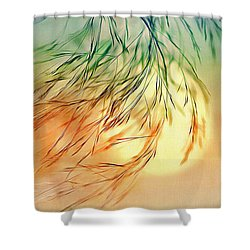 Wispy Sunset-0 Shower Curtain