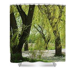 Wispy Willows-1 Shower Curtain