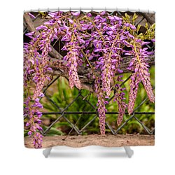 Wisteria Blooming Shower Curtain