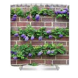Wisteria Frutescens Longwood Purple Shower Curtain