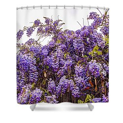Wisteria Spring Bloom Shower Curtain