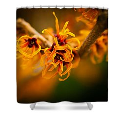 Shower Curtain featuring the photograph Witch Hazel by Erin Kohlenberg