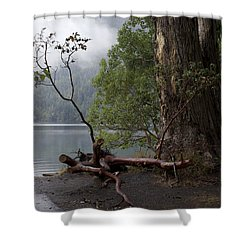 Witness Tree - Peaceful Lake Shower Curtain
