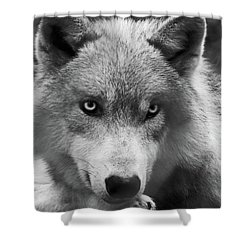 Wolf 1 Shower Curtain