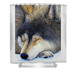 Wolf Dreams Shower Curtain by Brian  Commerford