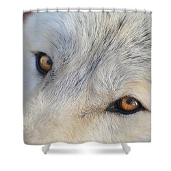 Wolf Eyes Shower Curtain by Carolyn Dalessandro