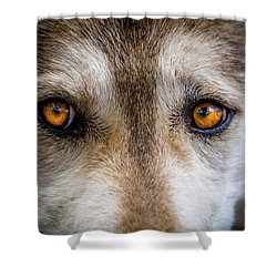 Shower Curtain featuring the photograph Wolf Eyes by Teri Virbickis