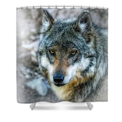 Wolf Gaze Shower Curtain by Elaine Malott