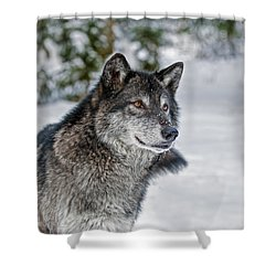 Wolf Portrait Shower Curtain
