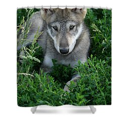 Wolf Pup Portrait Shower Curtain by Shari Jardina