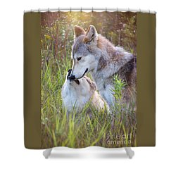 Wolf Soul Mates Shower Curtain