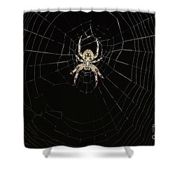 Wolf Spider And Web Shower Curtain