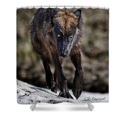 Wolf Tracking Me? Shower Curtain