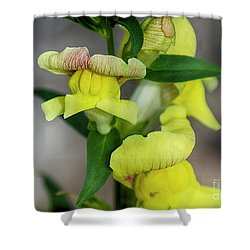 Wonderful Nature - Yellow Antirrhinum Shower Curtain