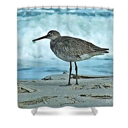 Wonderful Willet  Shower Curtain by Christy Ricafrente