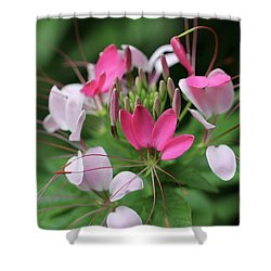 Wonders Of Cleome Shower Curtain by Deborah  Crew-Johnson