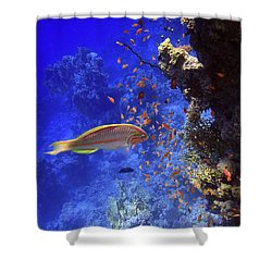 Wonders Of The Red Sea Shower Curtain