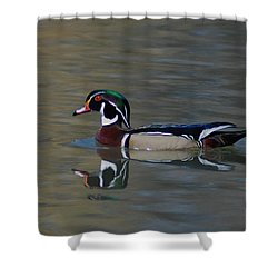 Wood Duck - Male Shower Curtain