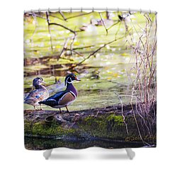 Wood Duck Couple Shower Curtain by Edward Peterson
