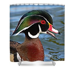Wood Duck Drake Calling In Spring Courtship Shower Curtain
