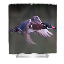 Wood Duck Flight Shower Curtain