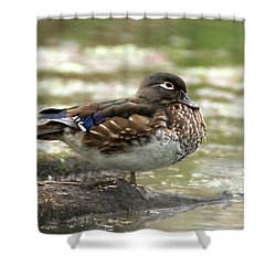 Wood Duck Hen Shower Curtain