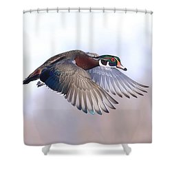 Wood Duck In Flight Shower Curtain by Lynn Hopwood
