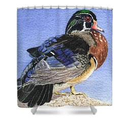 Wood Duck Shower Curtain by Lynn Quinn
