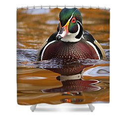 Wood-duck-male On The Golden Light Shower Curtain by Mircea Costina Photography